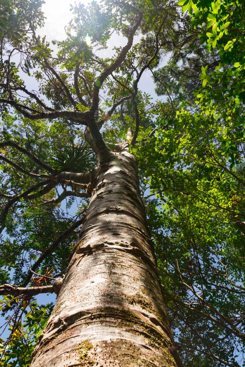 A tree with green leaves from a ground's eye view / photo by Jon Moore