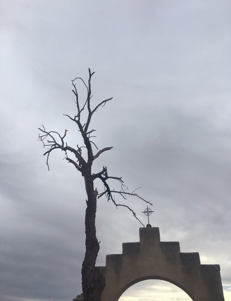 barren tree over mission