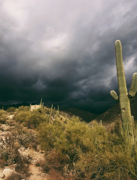 Photo of storm over Arizona mountains with saguaro cactus in front