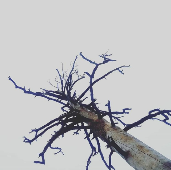 Barren tree against a gray sky