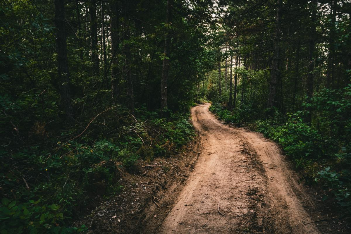 Dirt path in a Bulgarian forest / photo by Stefan Gogov