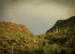 A desert pass studded with saguaros