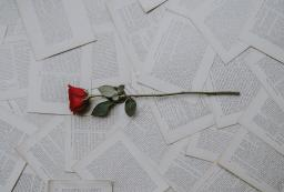 A single red rose sits on top of pages full of text, spread out
