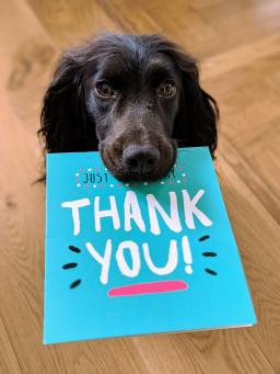 """A black dog holds a blue card that says, """"Thank you!"""" on it. Photo by Howie R."""