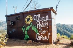 """mural of a sunflower alongside the phrase """"Always Room To Grow"""""""