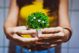 Hands holding a small plant / photo by Quah Choong Ming
