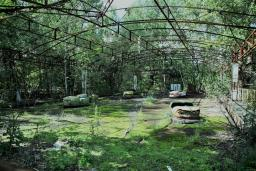 Abandoned bumper cars covered in greenery at Chernobyl