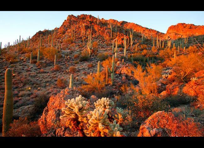 Tucson desert, autumn
