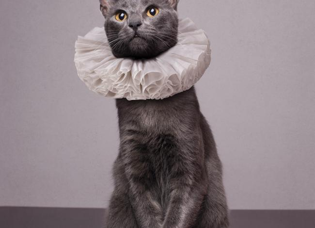 Cat wearing ruffled, Elizabethan collar / photo by Luku Muffin